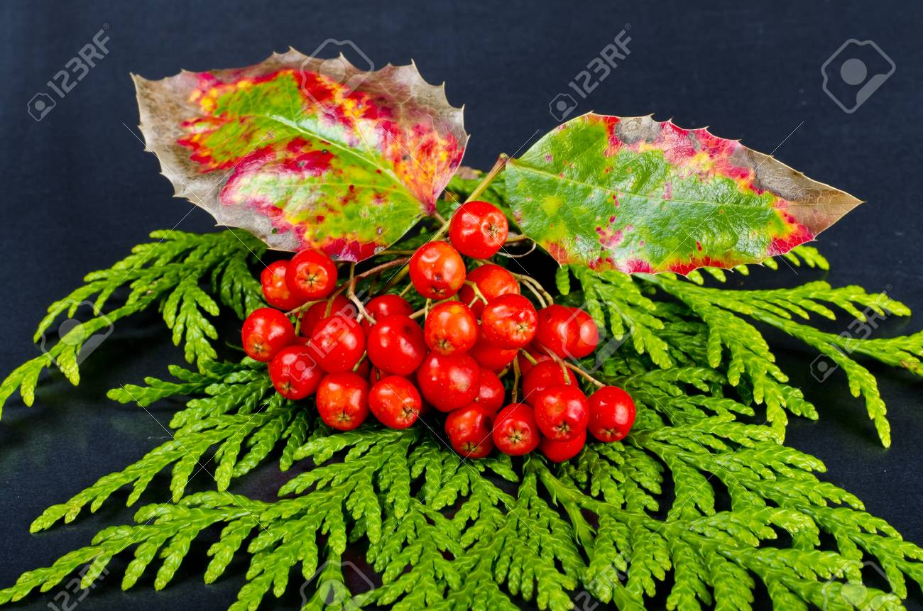 Rowanberry and other fruits Stock Photo - 10294702