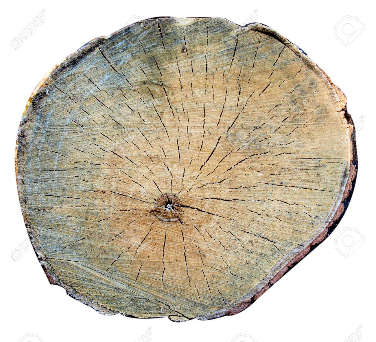 A top view of a tree stump, isolated image close view Stock Photo - 14225303