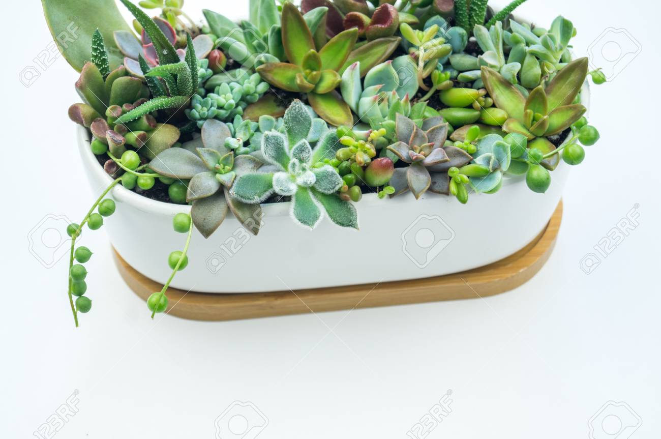 Composition From Green And Blue Succulents In Ceramic Pots On Stock Photo Picture And Royalty Free Image Image 109259500