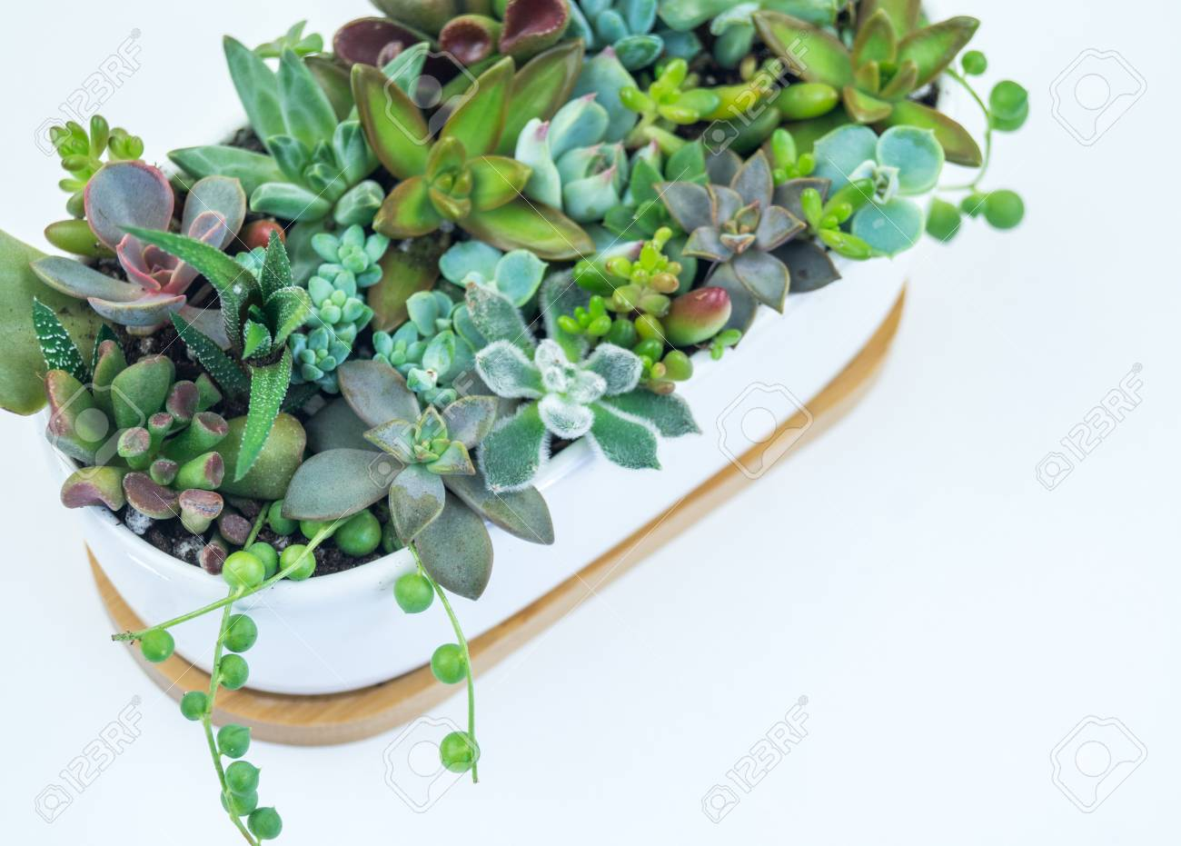 Composition From Green And Blue Succulents In Ceramic Pots On Stock Photo Picture And Royalty Free Image Image 109259504