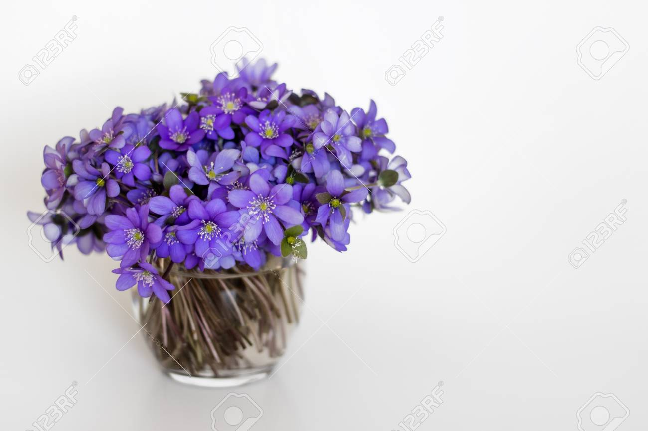 123RF.com & Hepatica purple flowers in a small glass vase on white background.