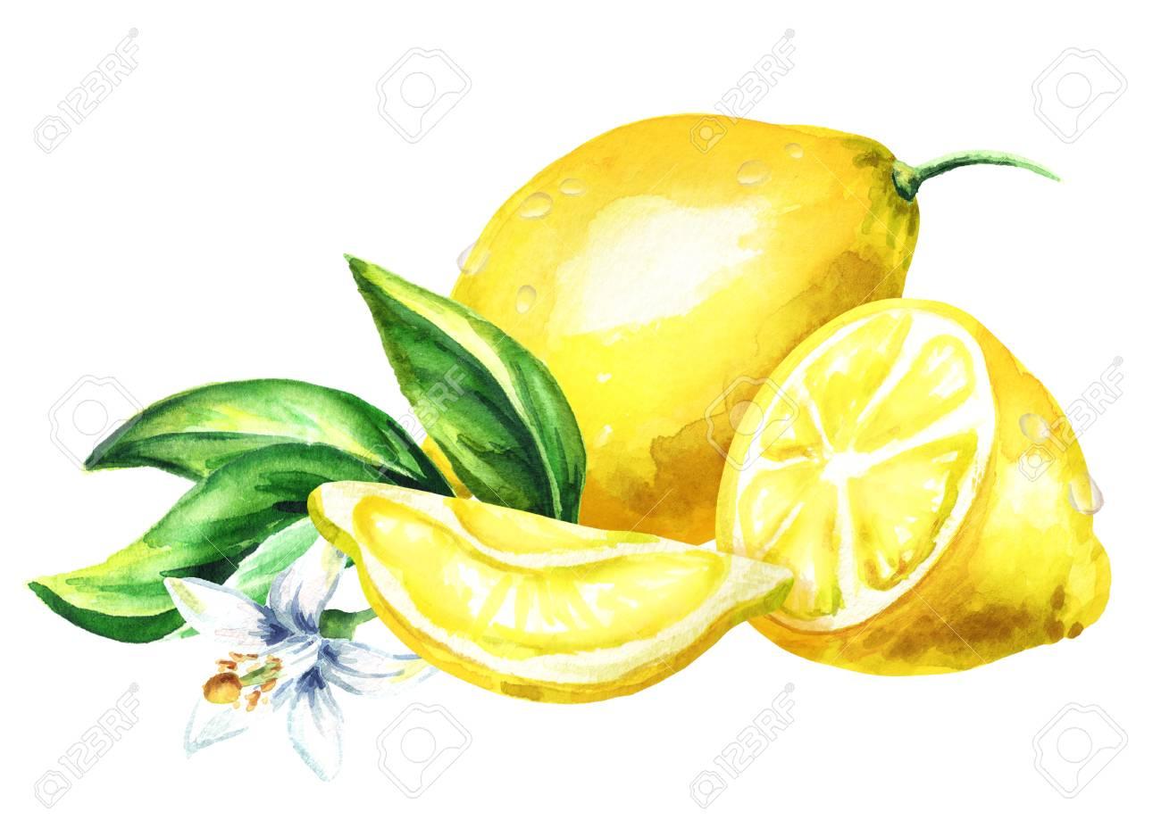 Frutas Frescas De Limón Hojas Y Composición De Flores Ilustración De Dibujo A Mano De Acuarela