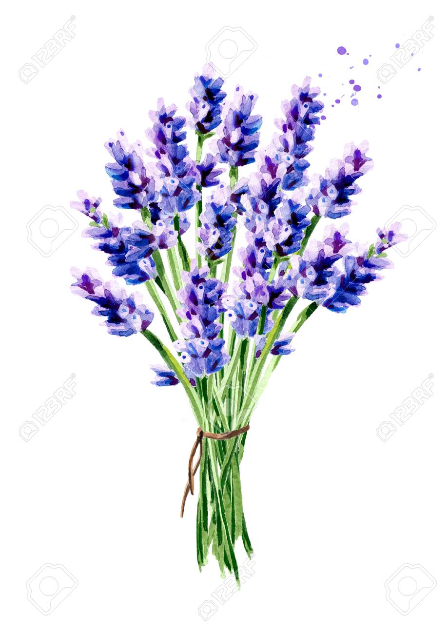 Lavender Summer Bouquet Watercolor Hand Drawn Vertical Illustration Stock Photo Picture And Royalty Free Image Image 99340091