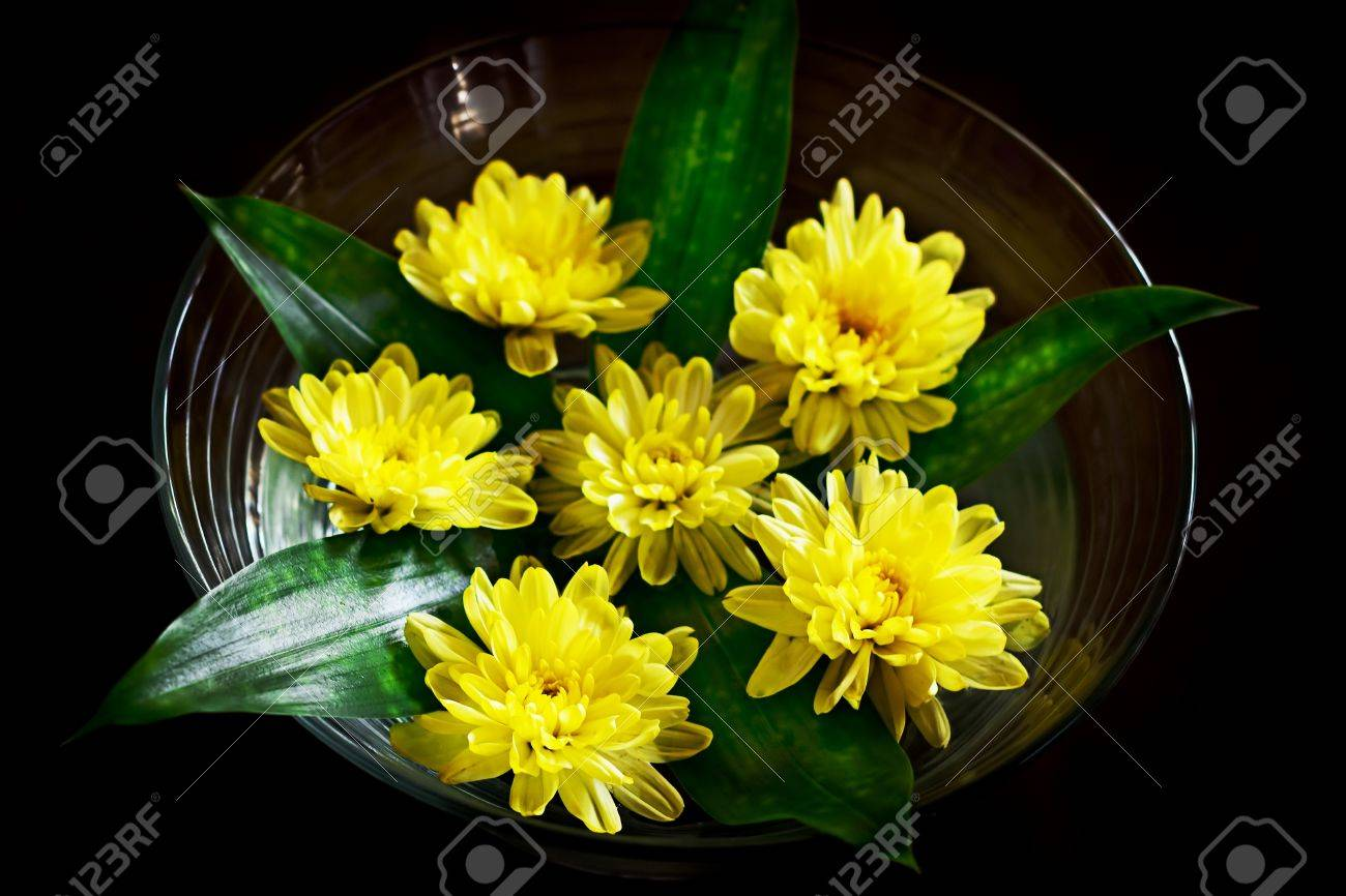 Yellow Flower Arrangement Pretty Daysies In The Bowl With Water