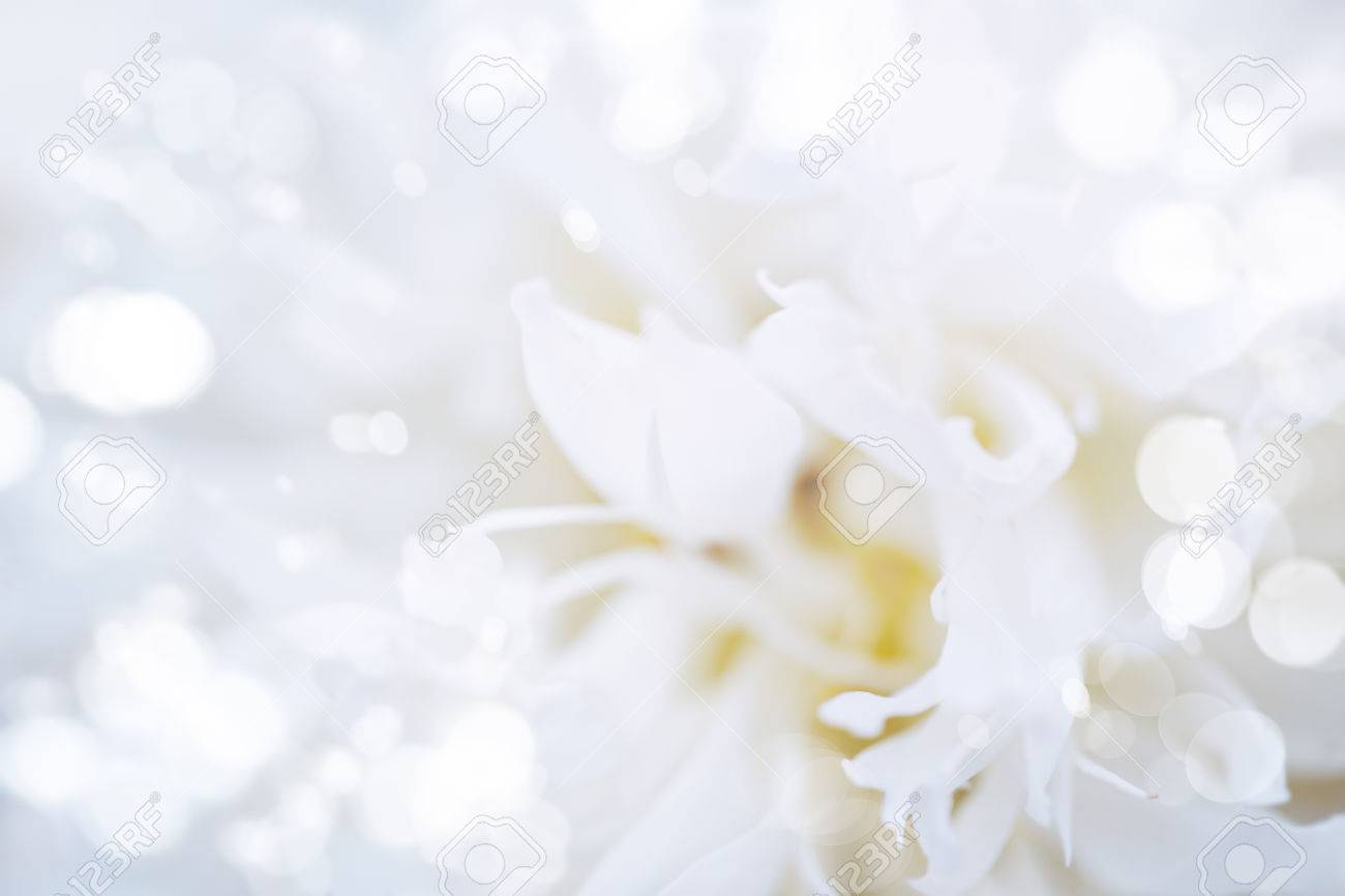Abstract nature background white flower close up with bokeh lights white flower close up with bokeh lights stok fotoraf 30161471 mightylinksfo