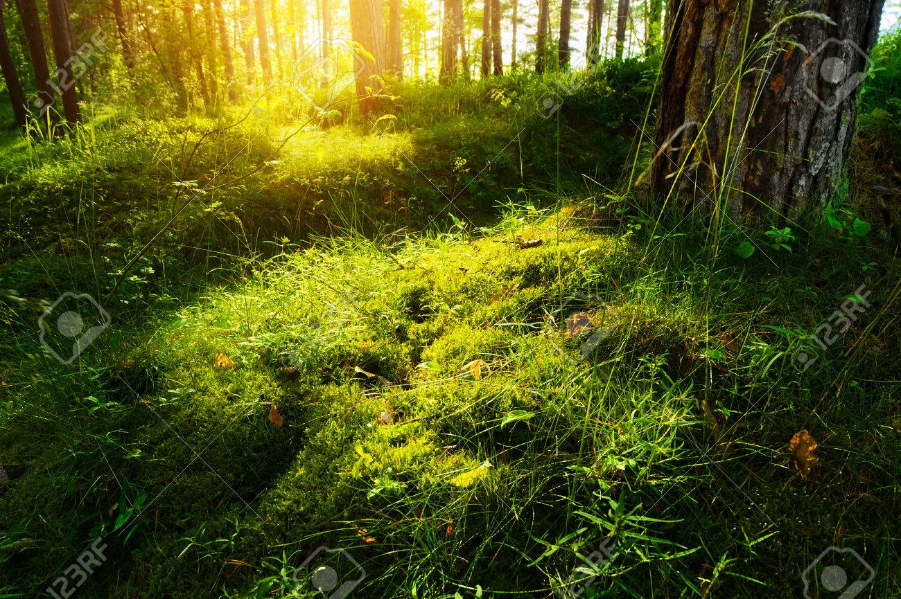 Summer Forest Undergrowth Vegetation Grass Shrubs And Moss