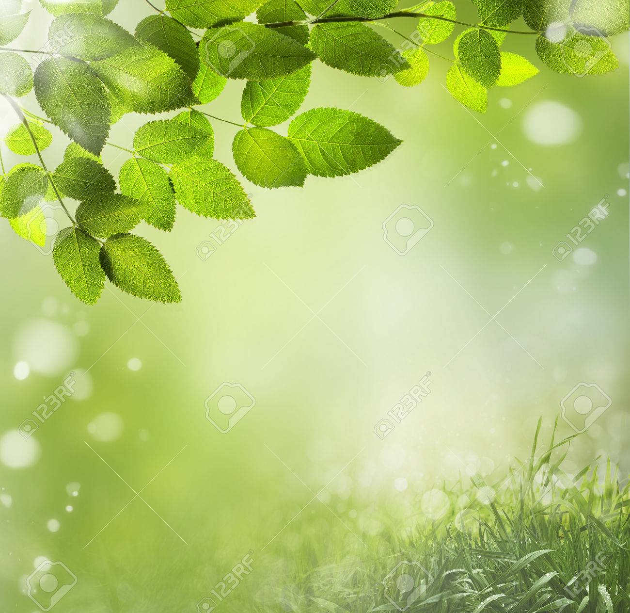 spring or summer season abstract nature background stock photo