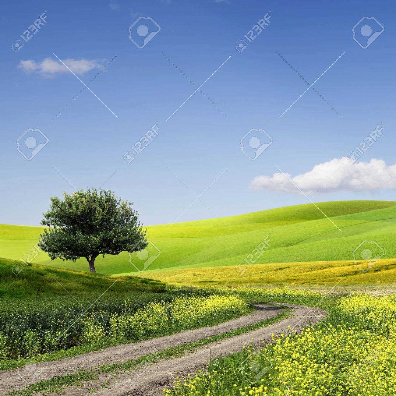 Green Grass Field Landscape with fantastic clouds in the background - 53768739