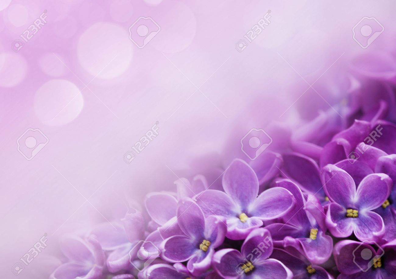 Macro Image Of Spring Lilac Violet Flowers Abstract Soft Floral Stock Photo Picture And Royalty Free Image Image 53770343