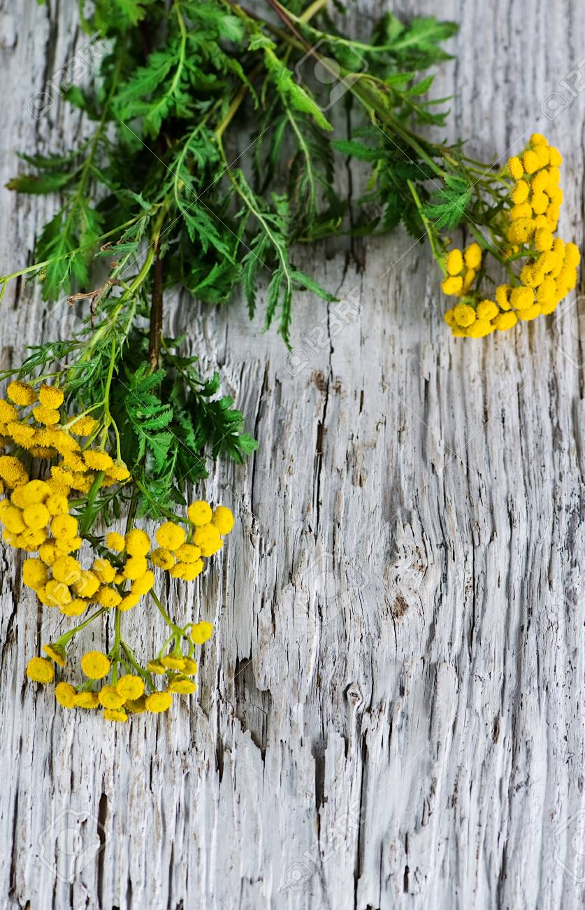 Yellow flowers of  tansy on the wooden background Stock Photo - 14964593