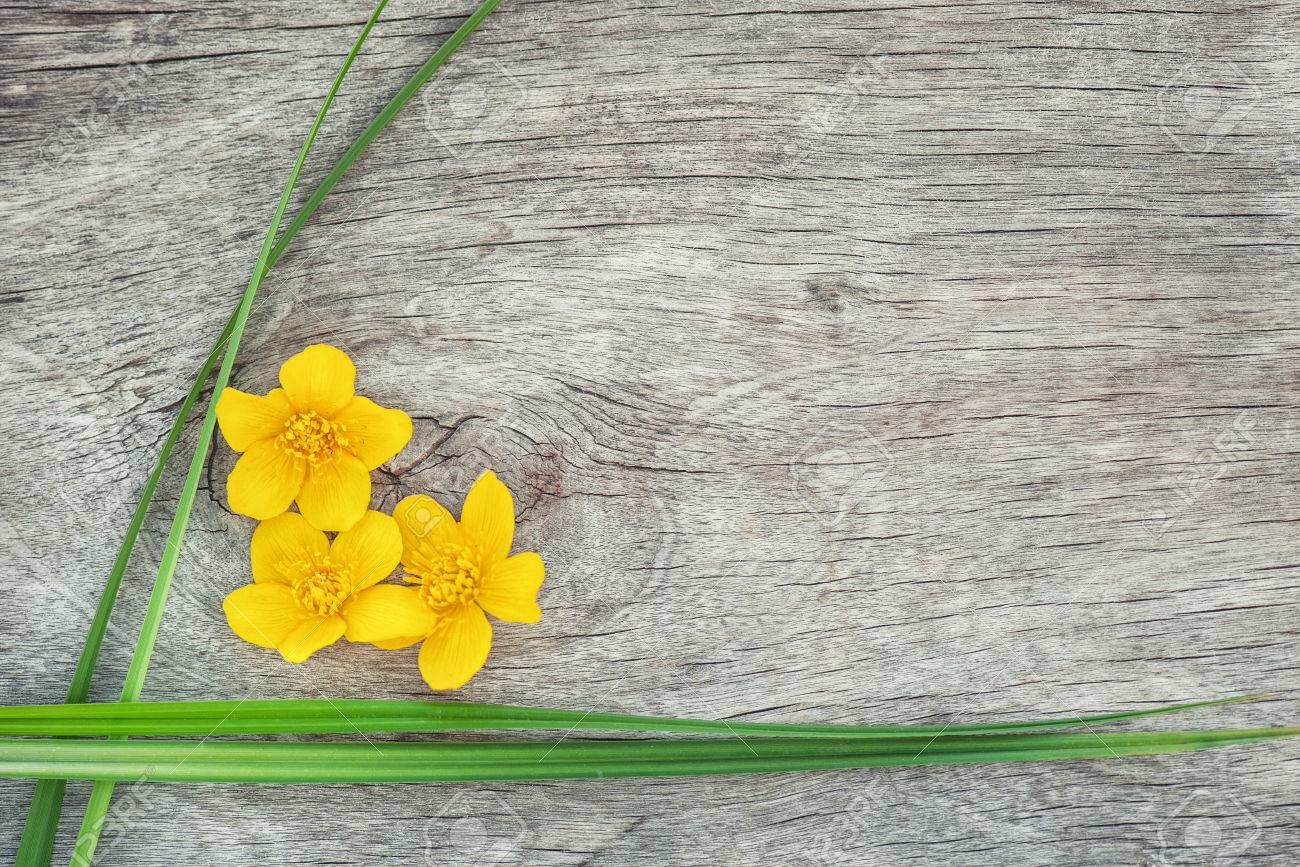 Yellow Flower And Green Grass On The Old Rustic Wood Background