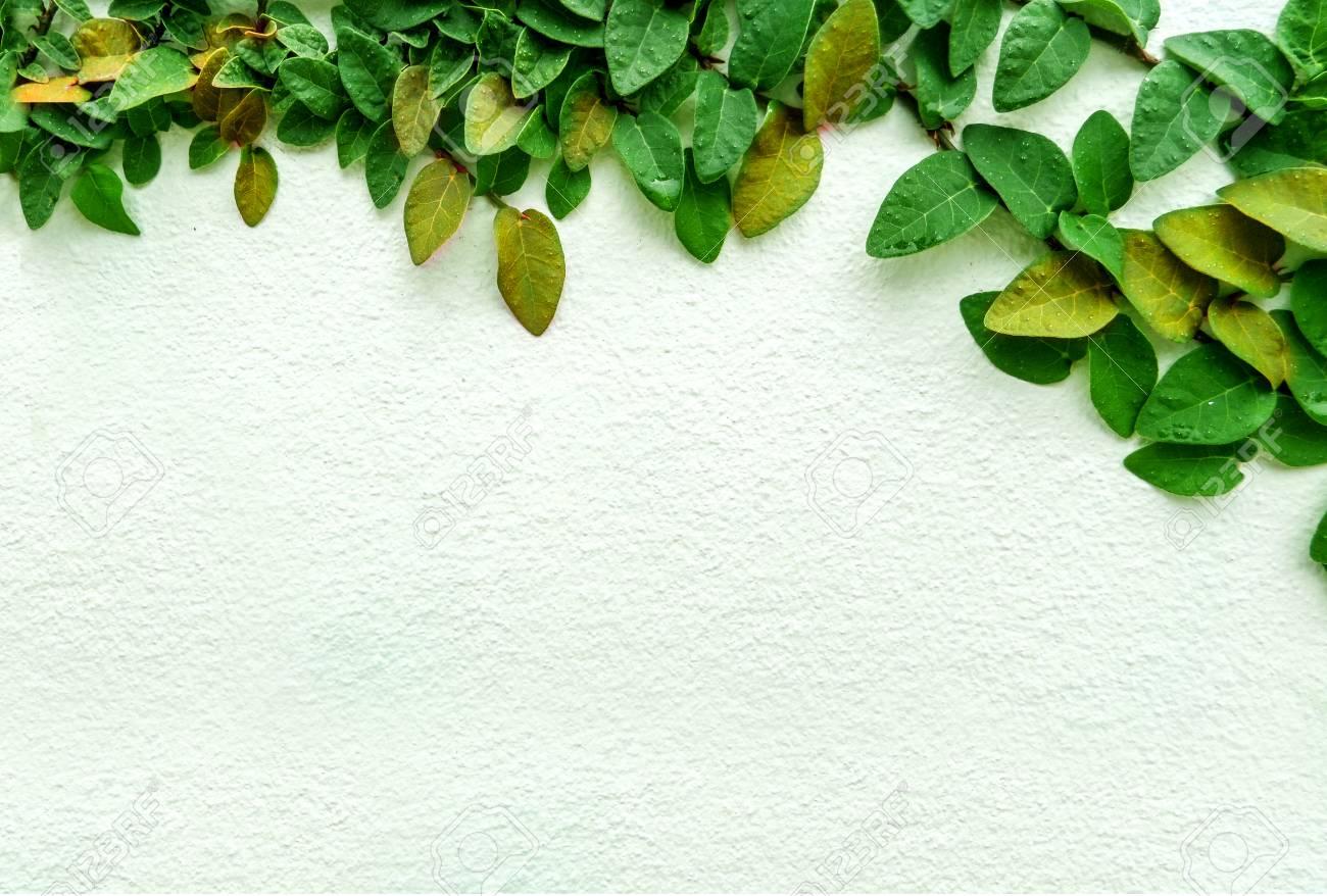Grüne Blatt Grenze, Isolat Der Pflanze An Der Wand Im Garten ...