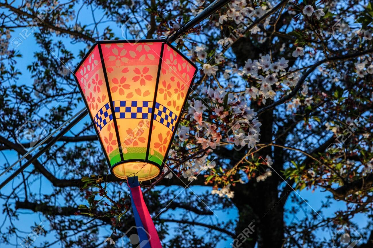 Japanese lantern at dusk, surrounded by cherry blossom trees (sakura). - 149445864