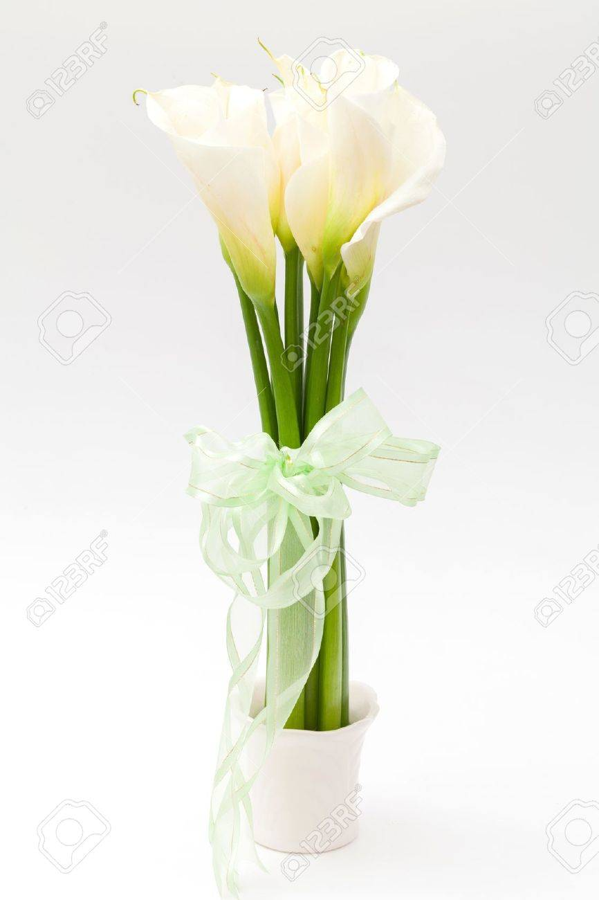 White calla lily in vase stock photo picture and royalty free white calla lily in vase stock photo 17591499 reviewsmspy