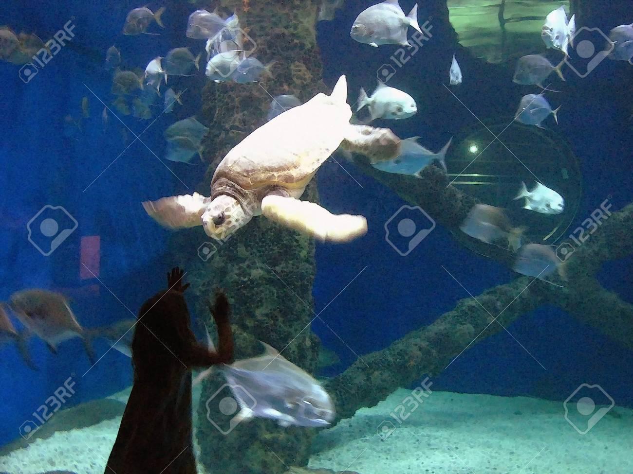 Fish in tank swimming - Stock Photo Little Girl Watching Turtle And Fish Swimming In A Tank In A Watercolor Art Effect