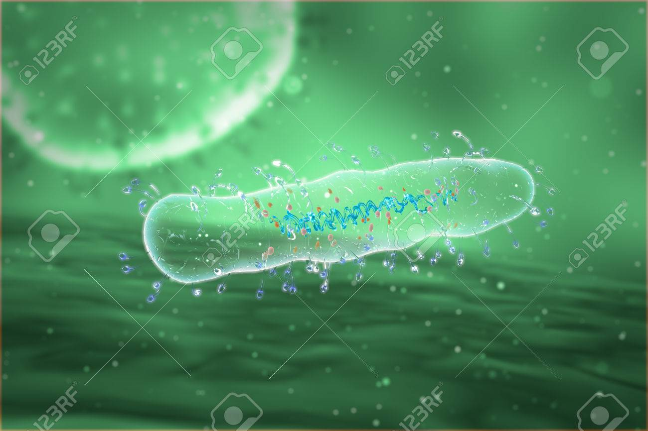 Medical illustration of the Bacteria - 43040948