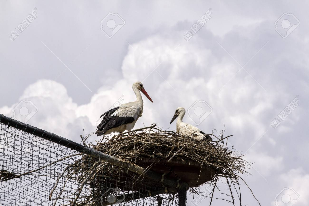 Storks in the nest over a big aviary - 97217973