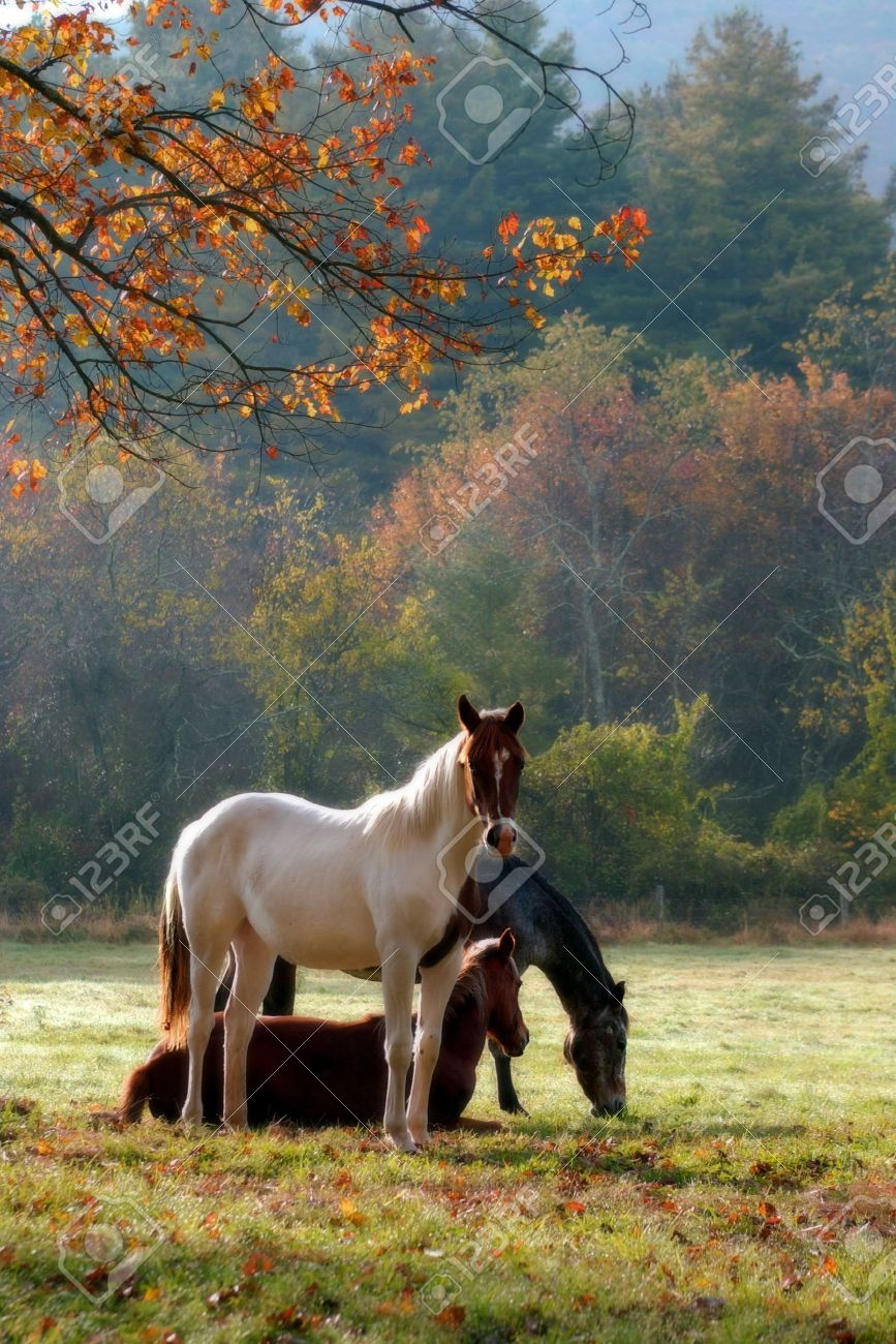 Three horses on a fall day with a mist in the air and a soft focus filter used to enhance the mood. Stock Photo - 2958801
