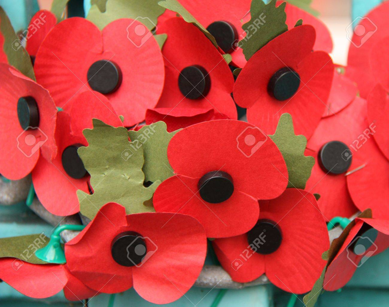a collection of remembrance day red poppys stock photo picture