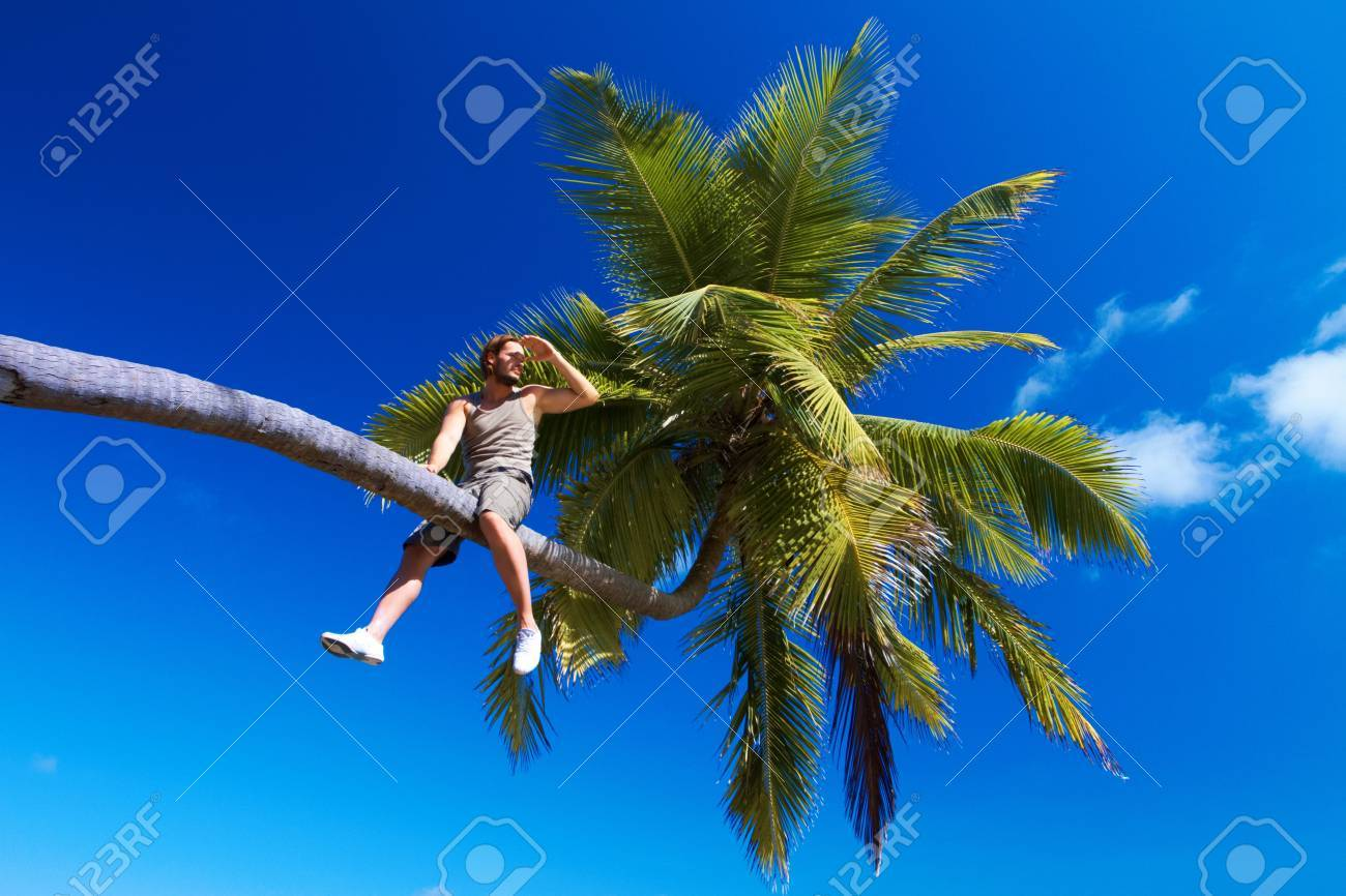 Handsome man is sitting on a palm tree Stock Photo - 6878950