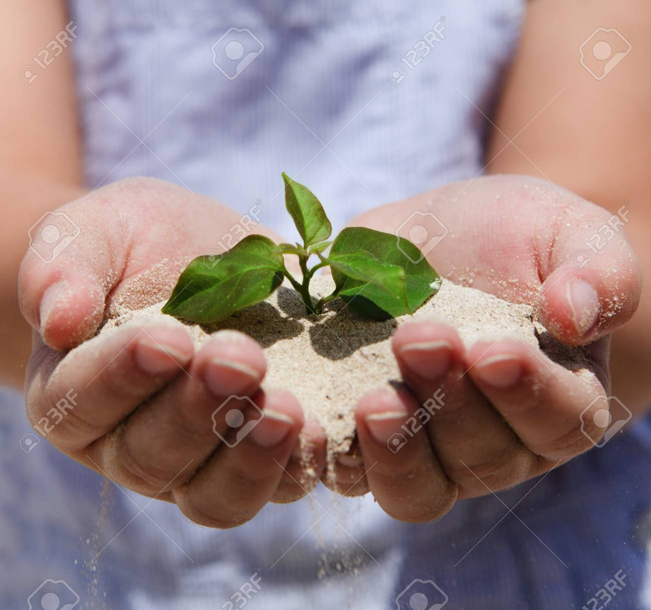 Little girl holding young plant in her hands Stock Photo - 13290794