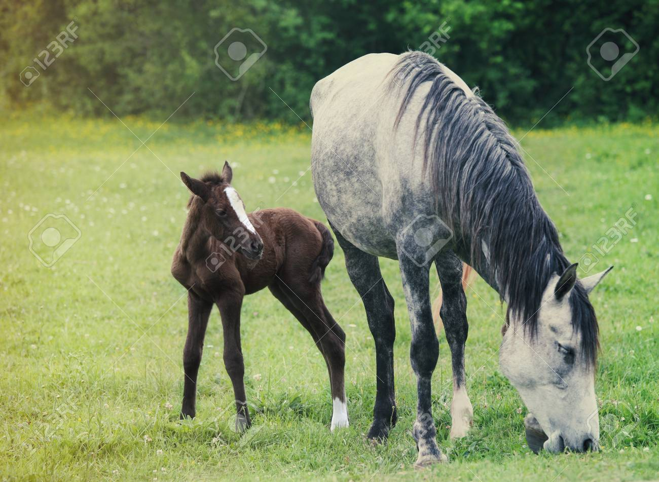 Newborn Baby Horse With Mother On The Green Grass Springtime Stock Photo Picture And Royalty Free Image Image 27724809