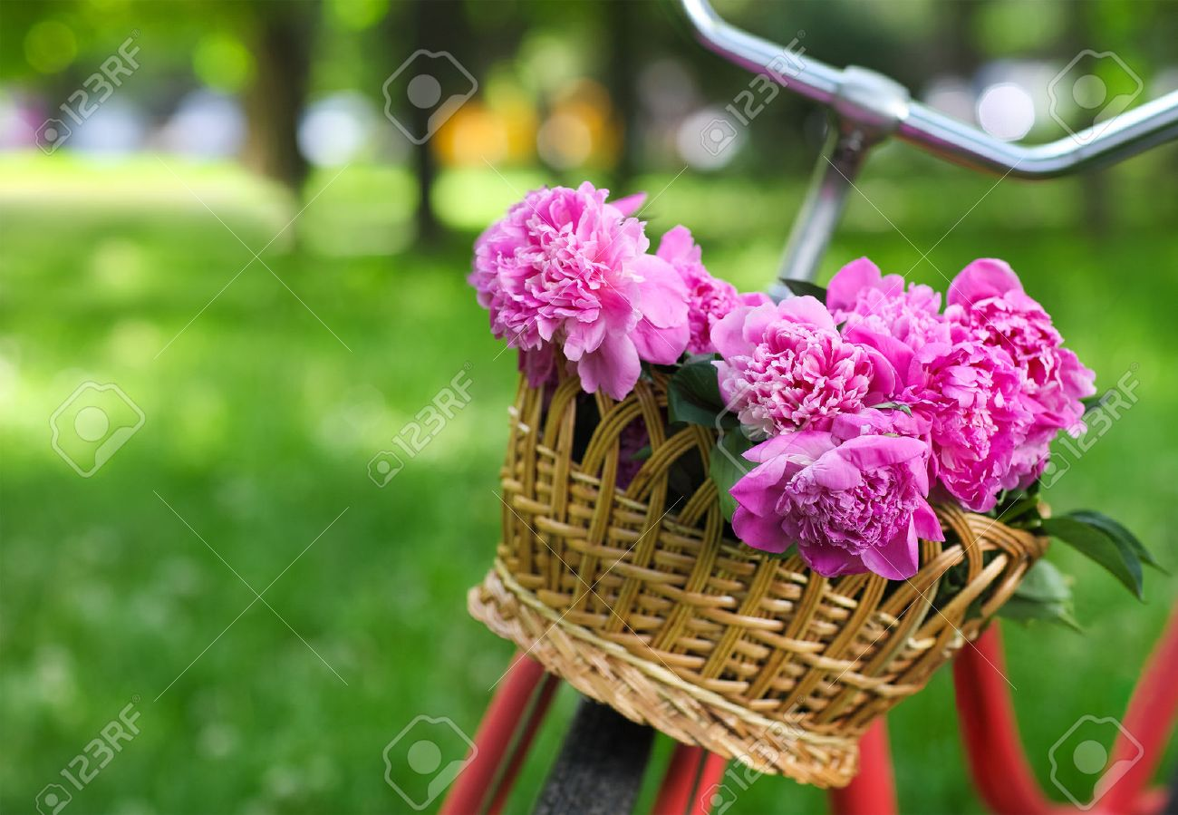 Vintage bicycle with basket with peony flowers in the spring park - 37722240
