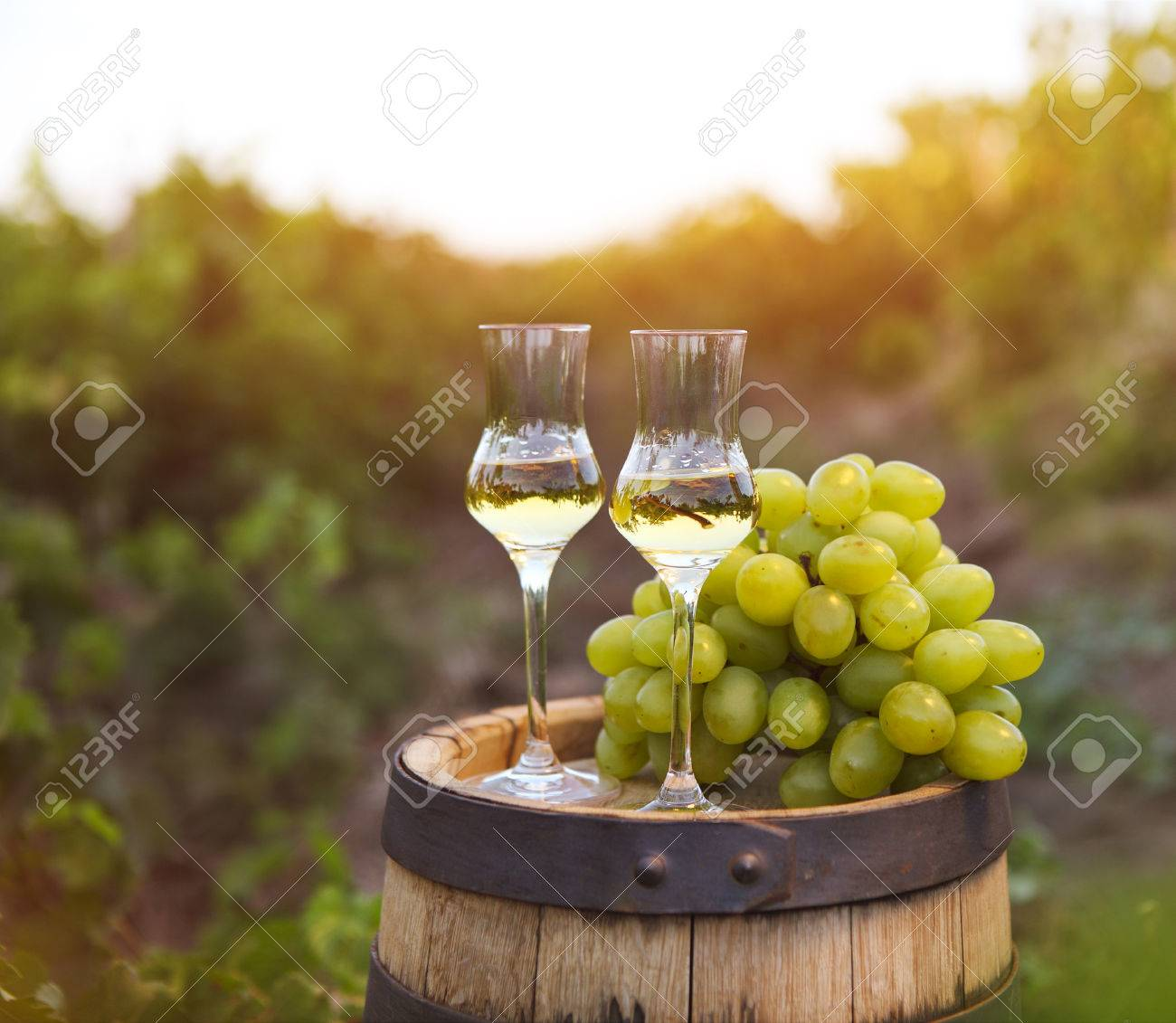 Two glasses of liquor or grappa with bunch of grapes against green background of the vineyard - 51347276