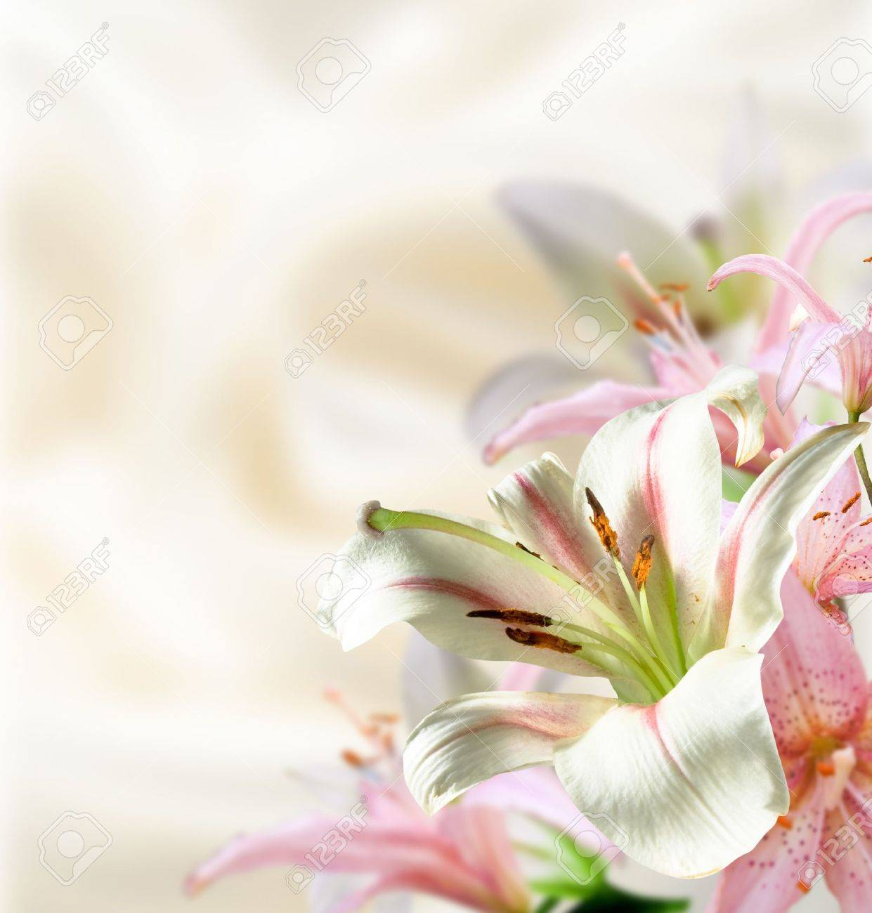 White and rose flowers lily on pastel background stock photo stock photo white and rose flowers lily on pastel background izmirmasajfo