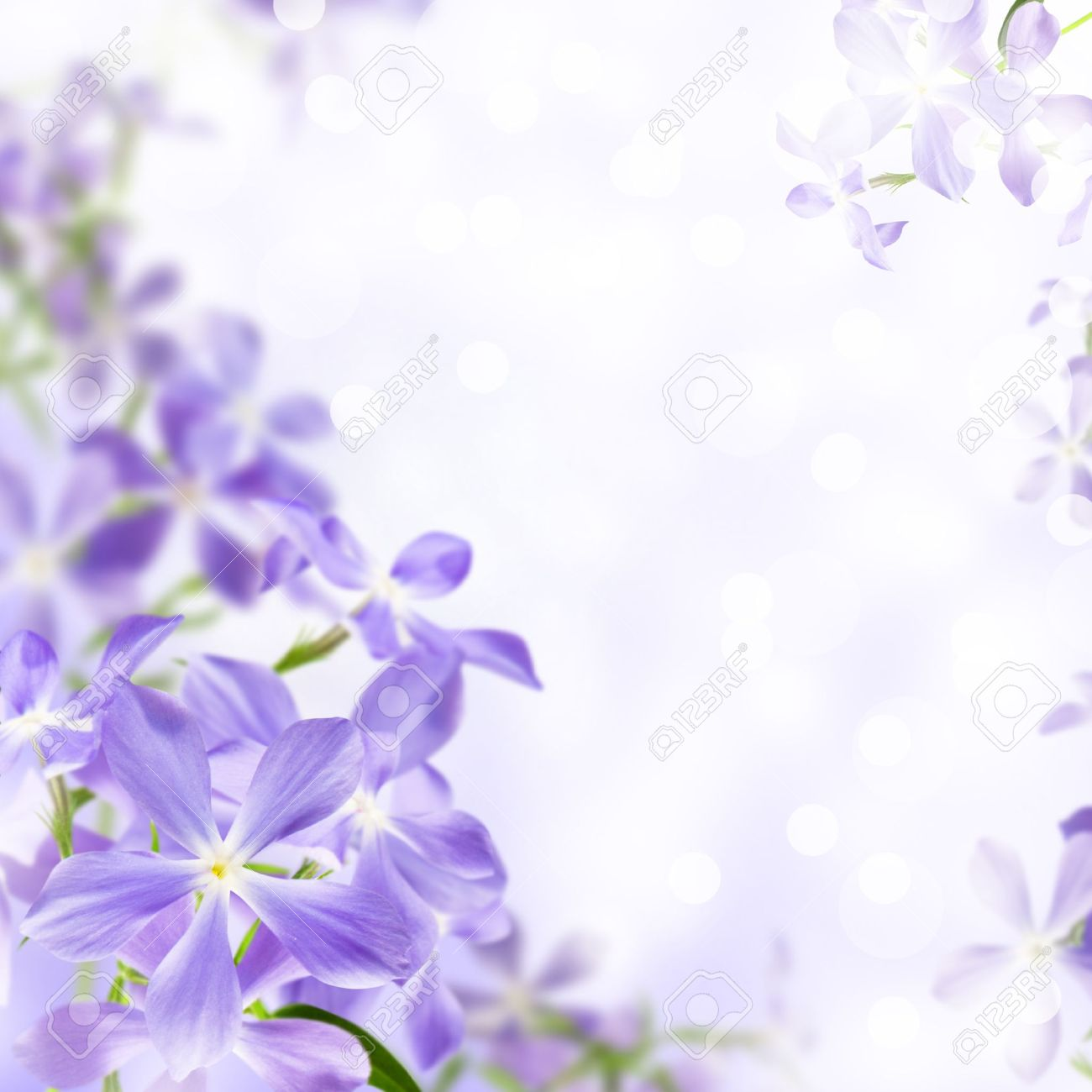 Wild Flowers Blue Blooming On Violet Background Stock Photo Picture And Royalty Free Image Image 9636579
