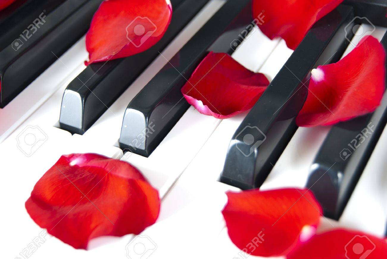Piano with red petal rose Stock Photo - 13107283