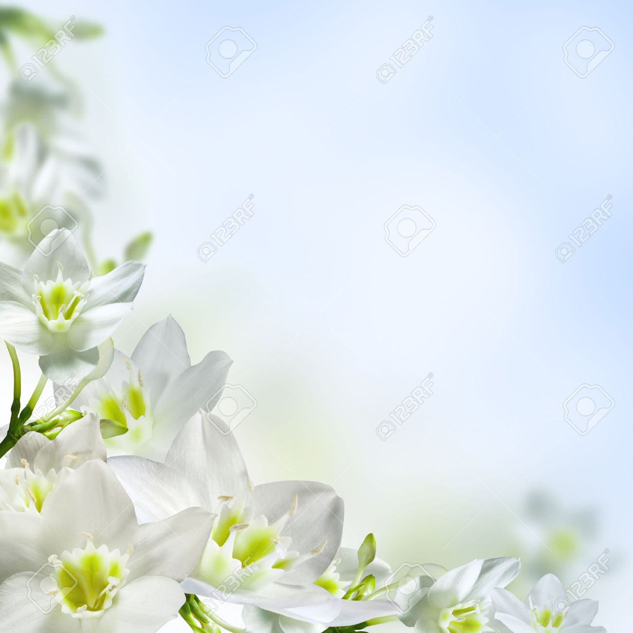 White flowers on a light blue background stock photo picture and stock photo white flowers on a light blue background mightylinksfo Choice Image