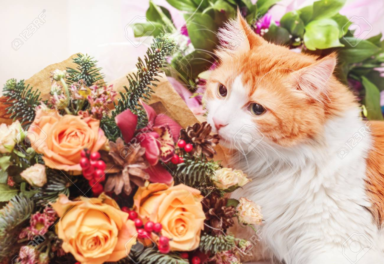 Adult Red Beauty Cat And Flowers Bouquet Stock Photo, Picture And ...