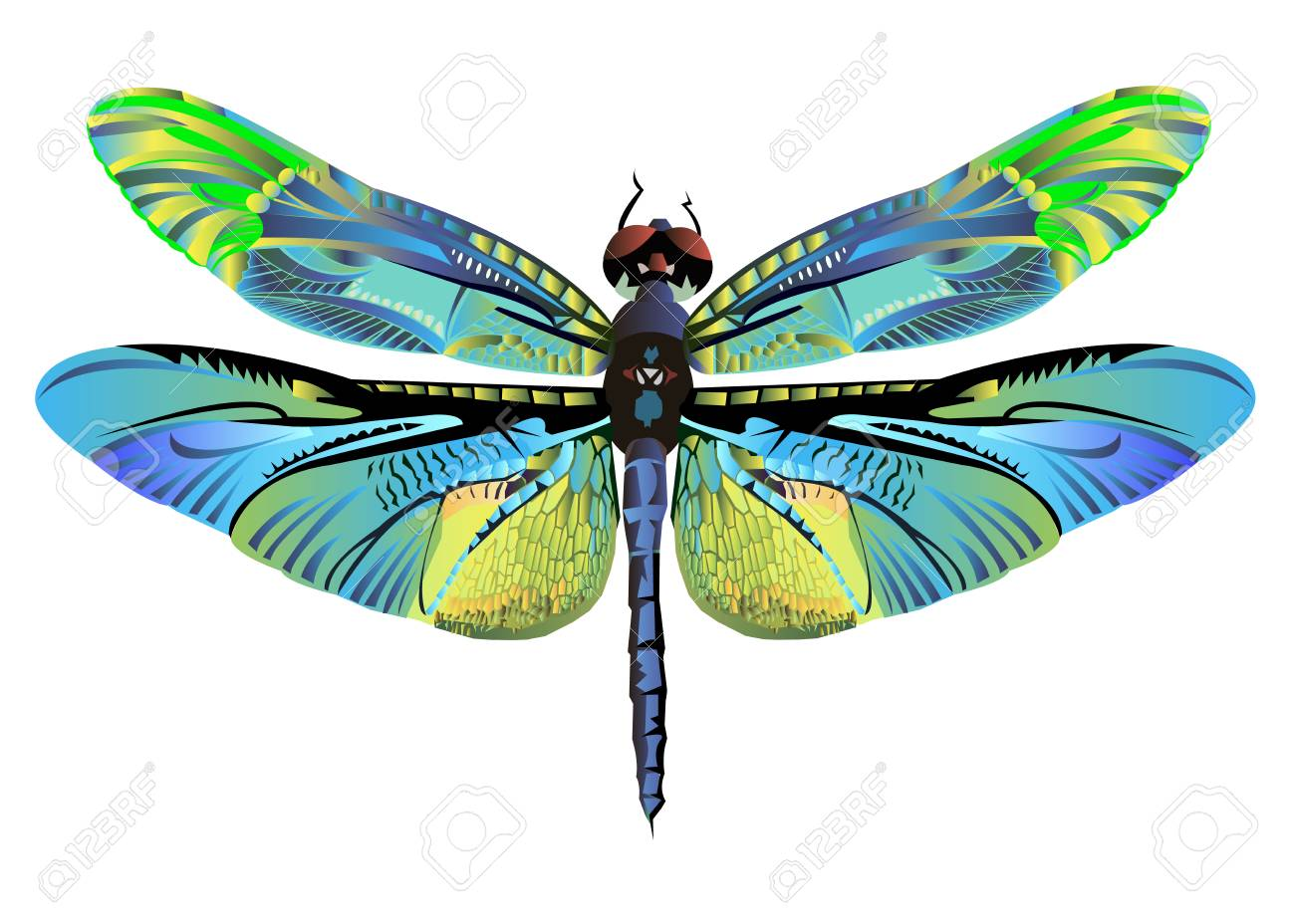 Vector Color Art Dragonfly Nature Wildlife Fly Royalty Free Cliparts
