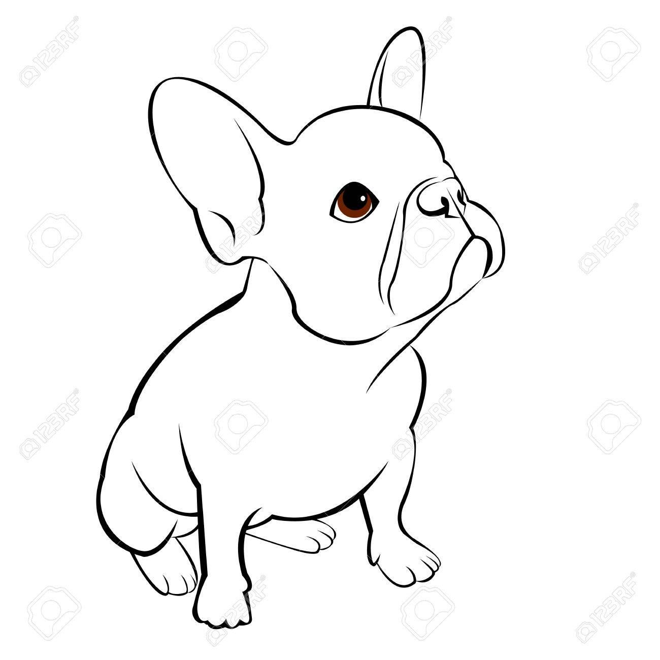 Bulldog Chien Animal Francais Vecteur Illustration Animal Familier Race Mignon Dessin Chiot Clip Art Libres De Droits Vecteurs Et Illustration Image 74774900