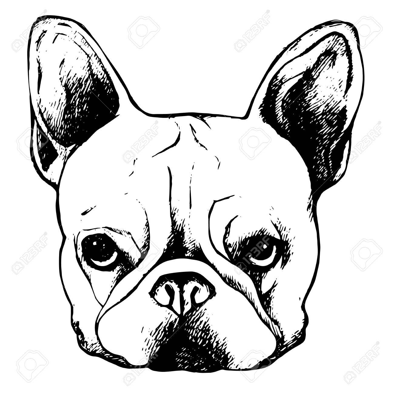 Bulldogge Hund Tier Französisch Vektor Illustration Haustier