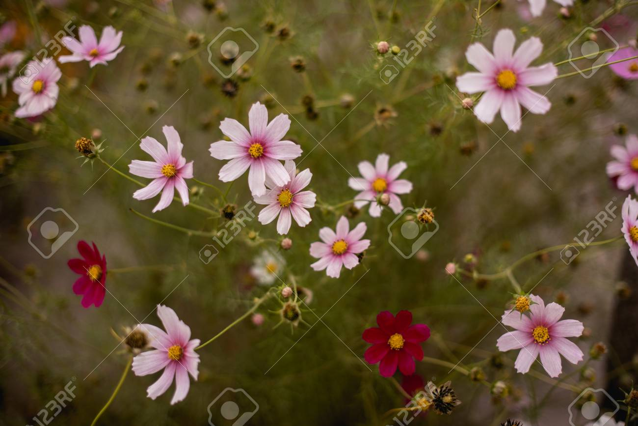 Natural Flower Background, Amazing Nature View Of Purple Flowers ...
