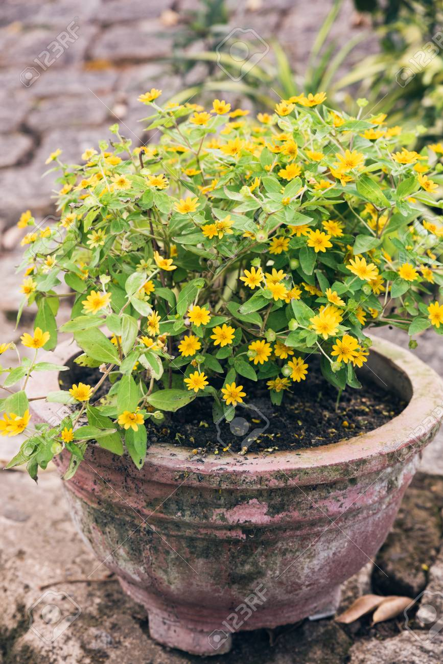 Old Ceramic Pot With Yellow Flowers Flower Pots With Plants Stock