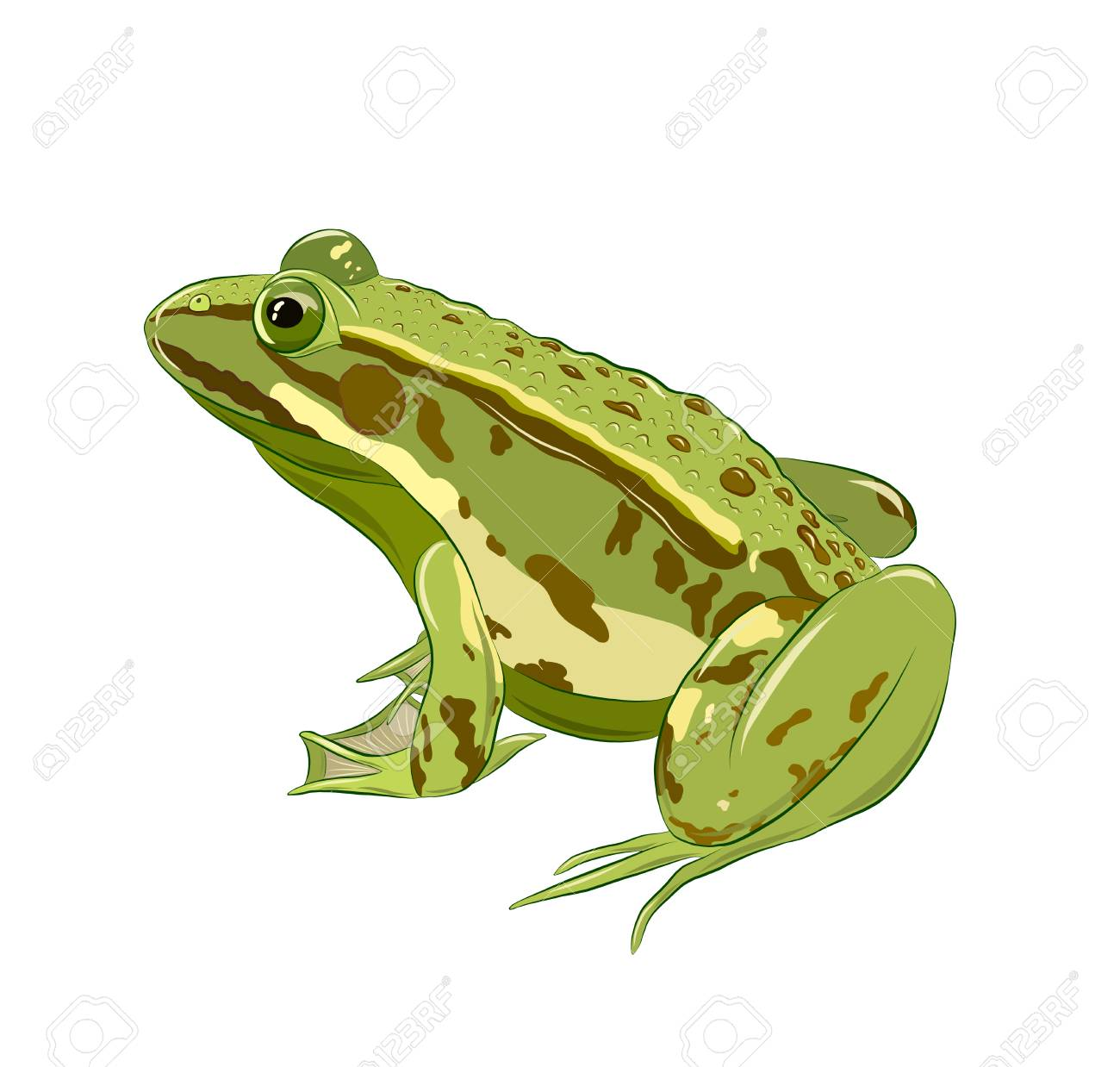 green toad with warts - 123617520