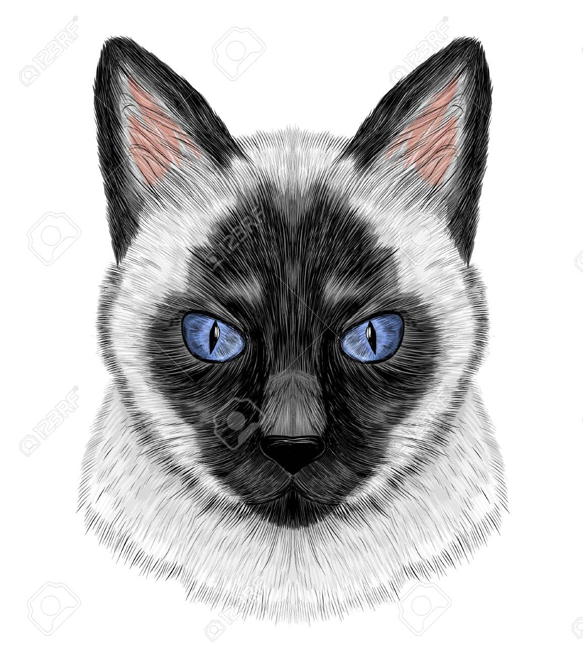 Siamese cat black and white with blue eyes - 141190247