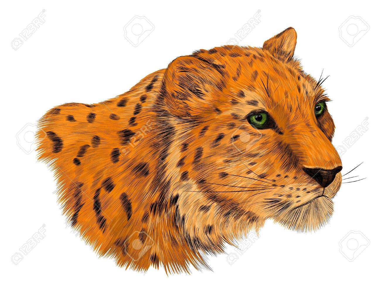 leopard animal of Africa with spots - 141190410