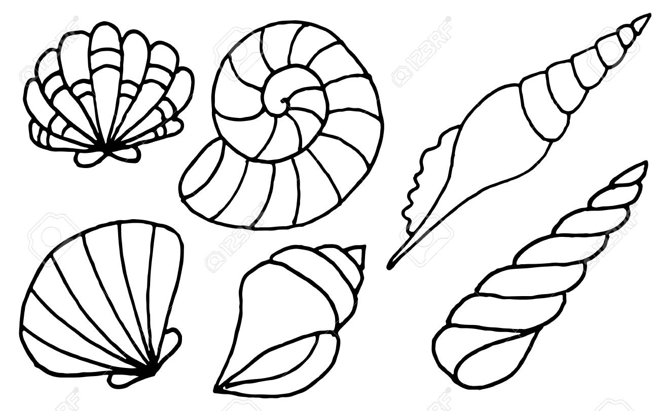 Hand Drawn Sea Shells Collection Marine Illustration For Coloring Books Shellfish Outlines Isolated On