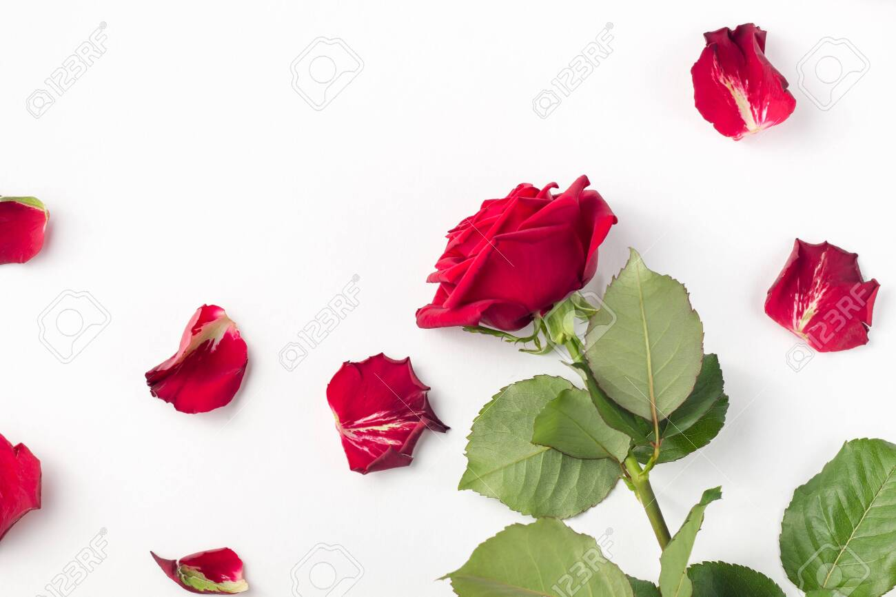Red roses and rose petals isolated on white with copy space - 119254391