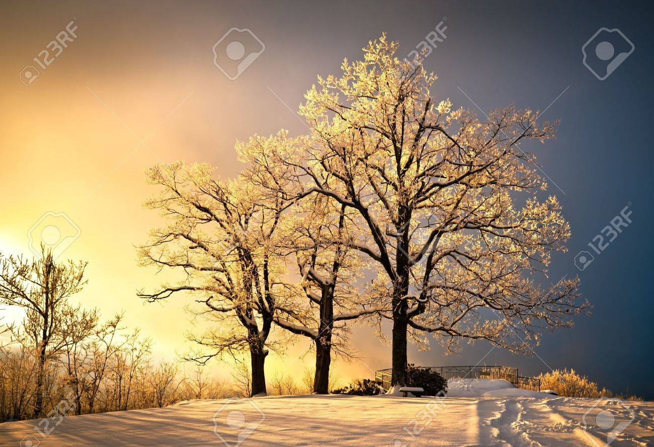 Ice And Frost Covered Oak Tree In Cold Winter Snow At Jump Off