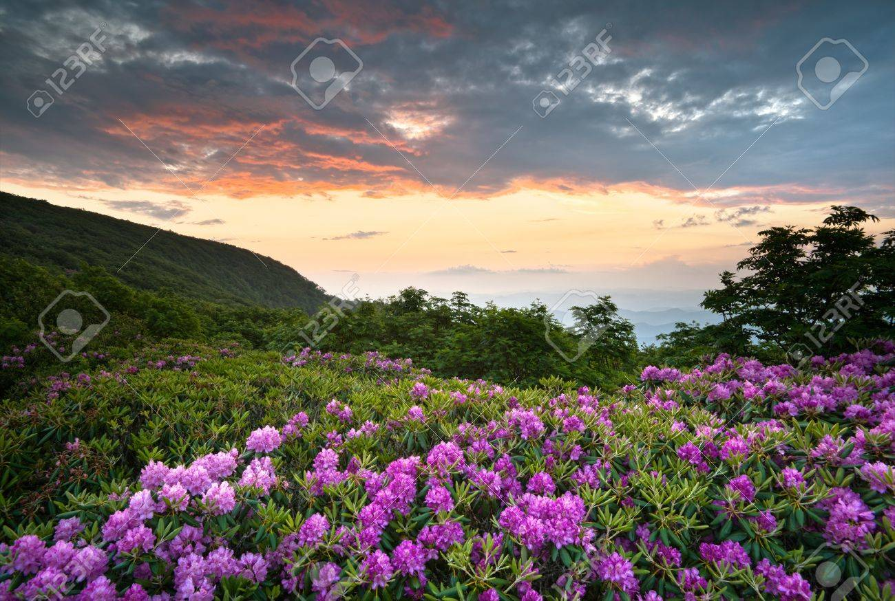 Blue Ridge Parkway Mountains Sunset over Spring Rhododendron Flowers Blooms scenic Appalachians near Asheville, NC Stock Photo - 9855656