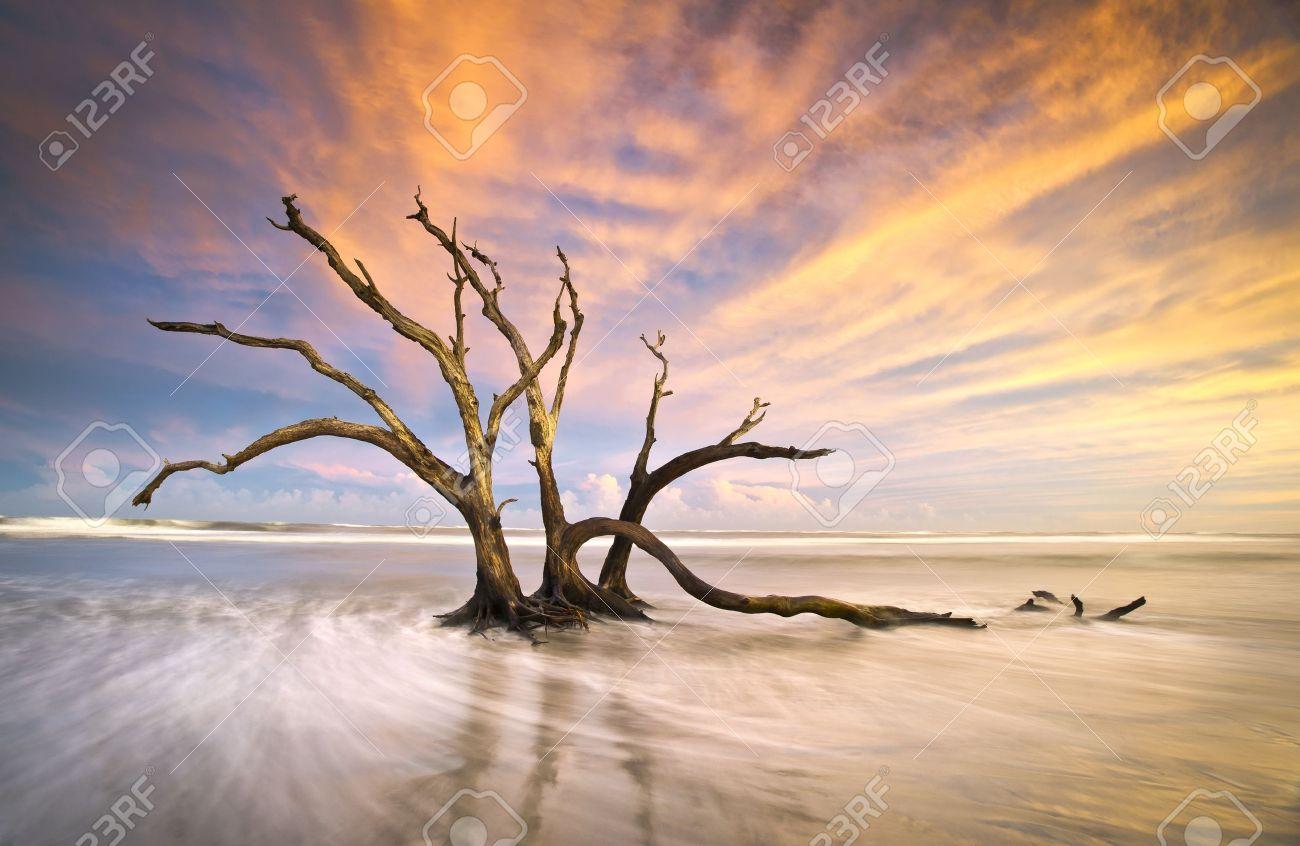 Folly Beach Dead Tree Driftwood Ocean Sunset Charleston SC Landscape Scene In South Carolina Stock Photo