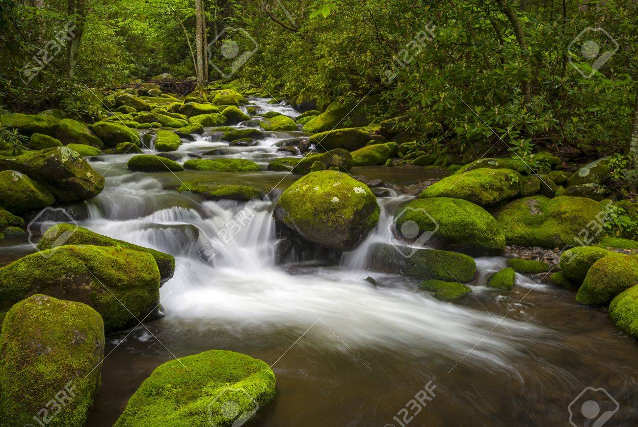 Great Smoky Mountains National Park Gatlinburg TN Roaring Fork River lush green forest landscape Stock Photo - 14247020
