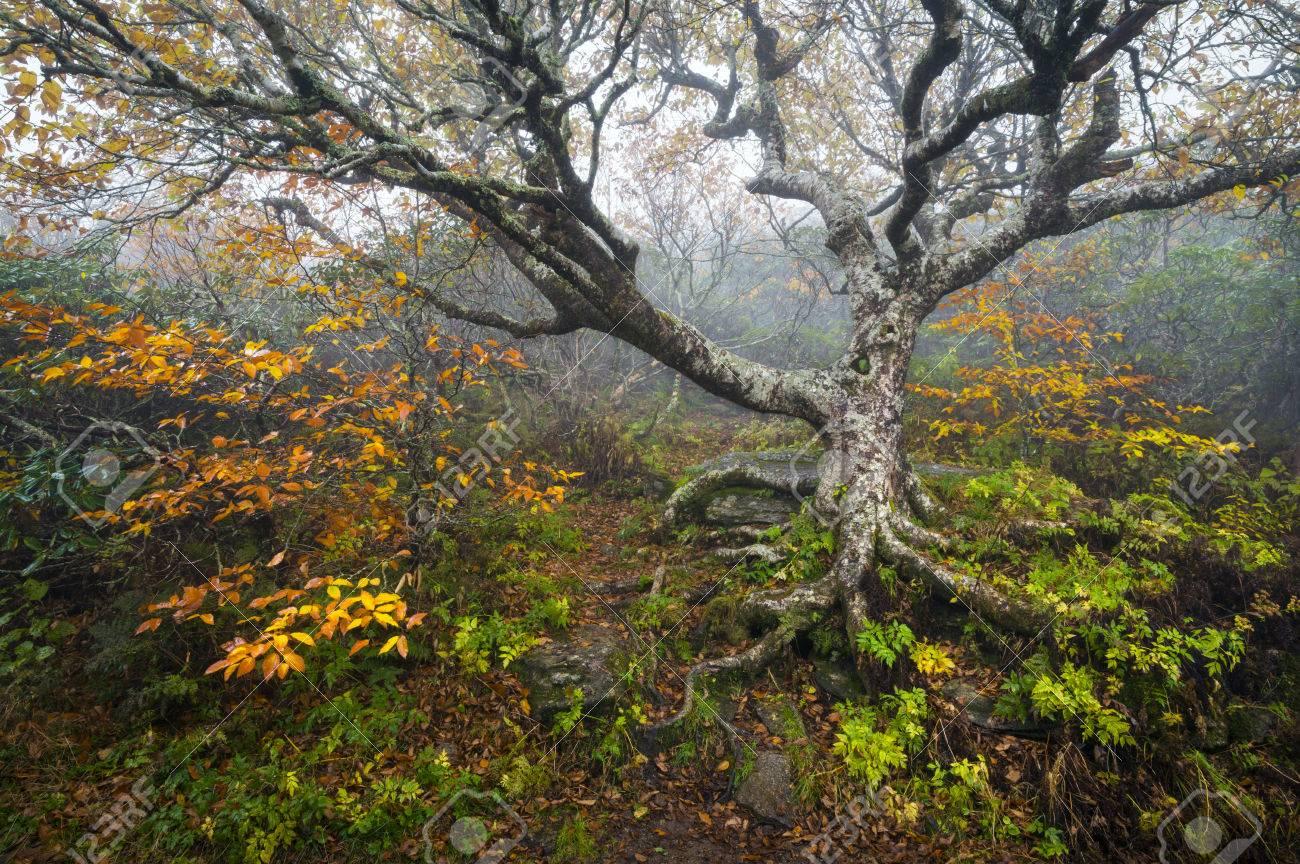 Craggy Gardens North Carolina Blue Ridge Parkway Autumn NC Scenic ...