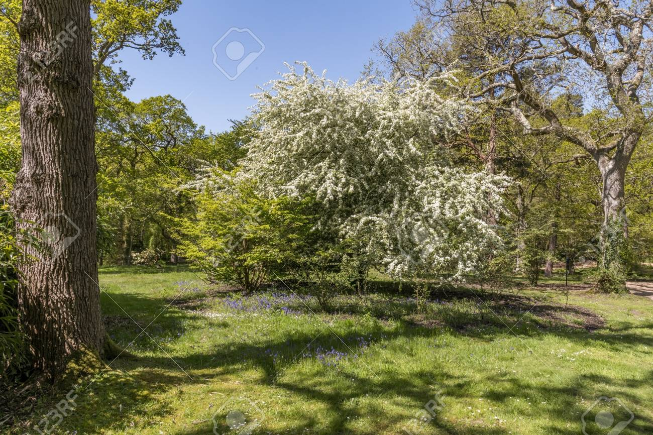 Quaint English Cottage Garden In Spring With A Variety Of Plants