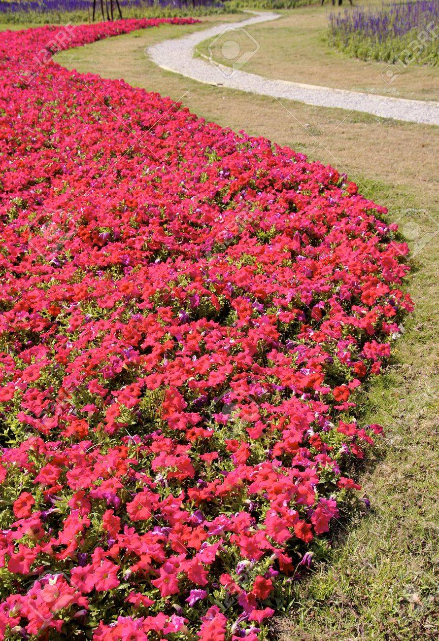 Beautiful Petunia Flower Bed And Curved Road Stock Photo Picture And Royalty Free Image Image 26737849
